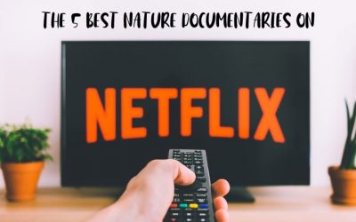 The 5 Best Nature Documentaries on Netflix