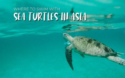 Where to Swim with Sea Turtles in Asia
