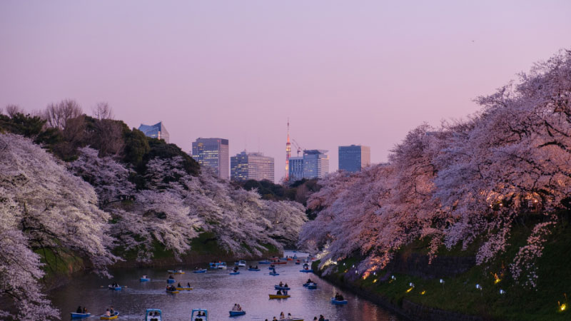 15 Cool Facts about Japan That You Need To Know