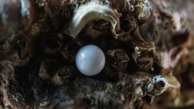 a pearl